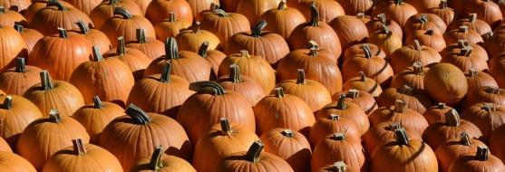 pumpkin-1651965_1280